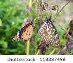 beautiful butterfly sitting in the tree - stock photo