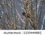 little finch in a tree   Shutterstock . vector #1133444882