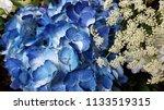 bouquet of summer flowers | Shutterstock . vector #1133519315