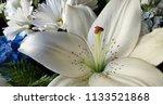 bouquet of summer flowers   lily | Shutterstock . vector #1133521868