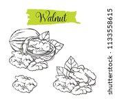 hand drawn sketch style walnut... | Shutterstock .eps vector #1133558615