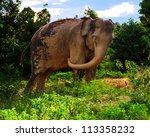 elephant thailand | Shutterstock . vector #113358232