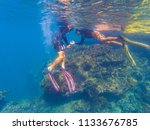 tourists come diving in...   Shutterstock . vector #1133676785