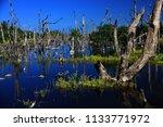 gulf of mexico. cuba.   Shutterstock . vector #1133771972