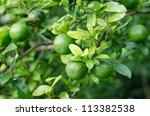 Lemon Hanging On Tree