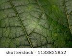 leaf macro shot   background | Shutterstock . vector #1133825852