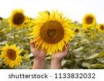 sunflower closeup.heart in a... | Shutterstock . vector #1133832032