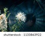 a beautiful marsh labradors...   Shutterstock . vector #1133863922