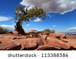 Lonely Tree In Canyonlands...