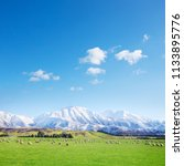 a new zealand sheep farm ... | Shutterstock . vector #1133895776