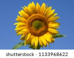 a sunflower in the sky | Shutterstock . vector #1133968622