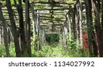 photo of vineyard pillars... | Shutterstock . vector #1134027992