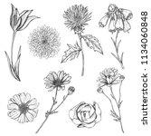 set of hand drawn sketch... | Shutterstock . vector #1134060848