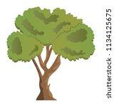 evergreen beautiful linden... | Shutterstock .eps vector #1134125675