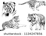 set of vector drawings on the... | Shutterstock .eps vector #1134247856