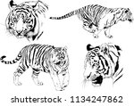set of vector drawings on the... | Shutterstock .eps vector #1134247862