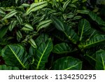 tropical leaves pattern. green... | Shutterstock . vector #1134250295