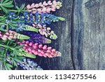 variety of lupin flowers on... | Shutterstock . vector #1134275546