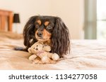 small cute dog with his tiny... | Shutterstock . vector #1134277058