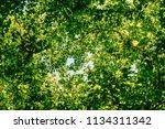 looking up towards tree... | Shutterstock . vector #1134311342