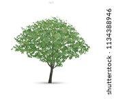 tree isolated on white... | Shutterstock .eps vector #1134388946