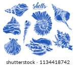 seashell  mollusk sea shell... | Shutterstock .eps vector #1134418742