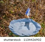 Eastern Bluebird On Bird Bath