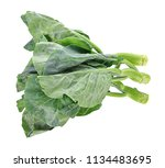 chinese broccoli on white... | Shutterstock . vector #1134483695