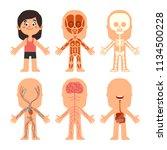 cartoon girl body anatomy.... | Shutterstock .eps vector #1134500228