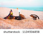 Stock photo beautiful dog of dachshund black and tan buried in the sand at the beach sea on summer vacation 1134506858