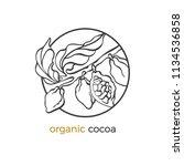 vector sticker of cocoa tree ...   Shutterstock .eps vector #1134536858