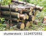 firewood background ... | Shutterstock . vector #1134572552