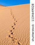 beautiful sand dune in sunrise... | Shutterstock . vector #1134649028