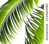 palm leaves isolated. realistic ... | Shutterstock .eps vector #1134664082