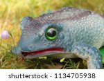 close up frog figure on a meadow | Shutterstock . vector #1134705938