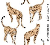 cheetah wild animal seamless... | Shutterstock .eps vector #1134766745