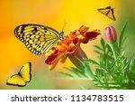 white  yellow and orange... | Shutterstock . vector #1134783515