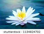 beautiful lotus flower with... | Shutterstock . vector #1134824702