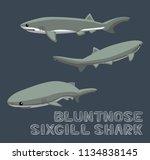 bluntnose sixgill shark cartoon ... | Shutterstock .eps vector #1134838145