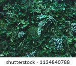 tropical plants for lush green... | Shutterstock . vector #1134840788