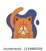 persian cat  vector flat...   Shutterstock .eps vector #1134880358