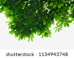 green leaves and branches on... | Shutterstock . vector #1134943748