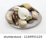 set of sea shell isolated on... | Shutterstock . vector #1134951125