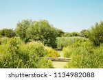 a view of lush marsh greenery... | Shutterstock . vector #1134982088