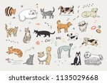different doodle vector cats... | Shutterstock .eps vector #1135029668