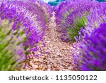 provence  france. close up... | Shutterstock . vector #1135050122