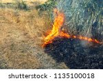 forest wildfire. burning field...   Shutterstock . vector #1135100018
