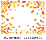 oak and maple leaf beautiful... | Shutterstock .eps vector #1135109672