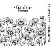 Daisy Flower Border Drawing....
