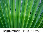 green tropical leaves texture... | Shutterstock . vector #1135118792